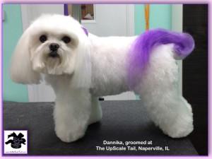Dannika purple tail