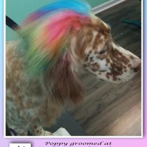 Multicolored Daphro, Poppy