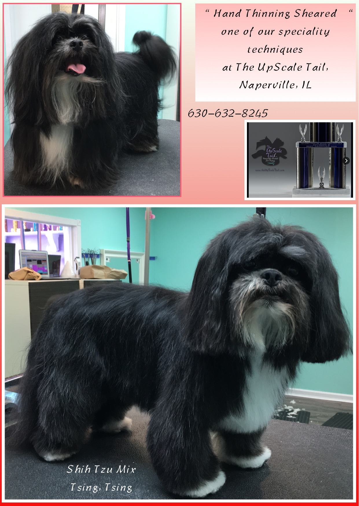 Tsing Tsing Shih Tzu Mix The Upscale Tail Pet Grooming Salon In
