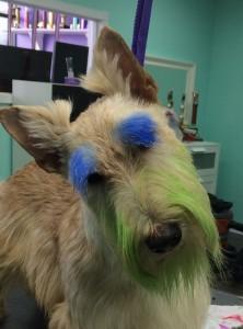Turbo brow and beard colored