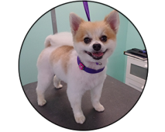 The upscale tail pet grooming salon in naperville il solutioingenieria Choice Image